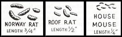 different kinds of rat poop