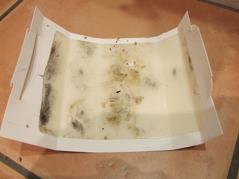 Glue trap with hair