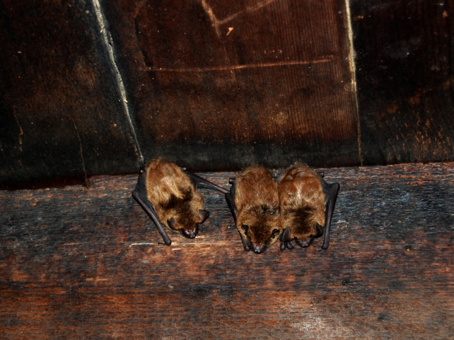 Bats on the ceiling