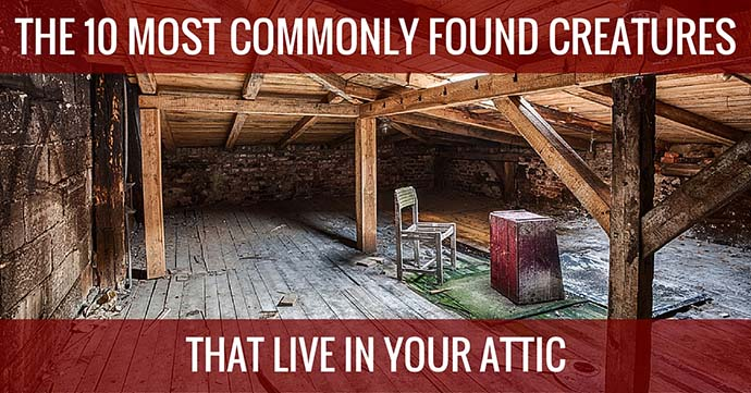 commonly found creatures in your attic