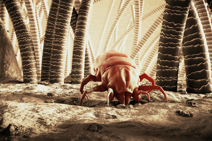 What Does A Dust Mite Look Like Do These Insects Bite