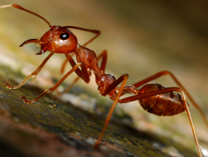 closeup of an ant