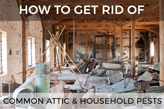 & The Guide To Getting Rid Of Common Attic u0026 Household Pests